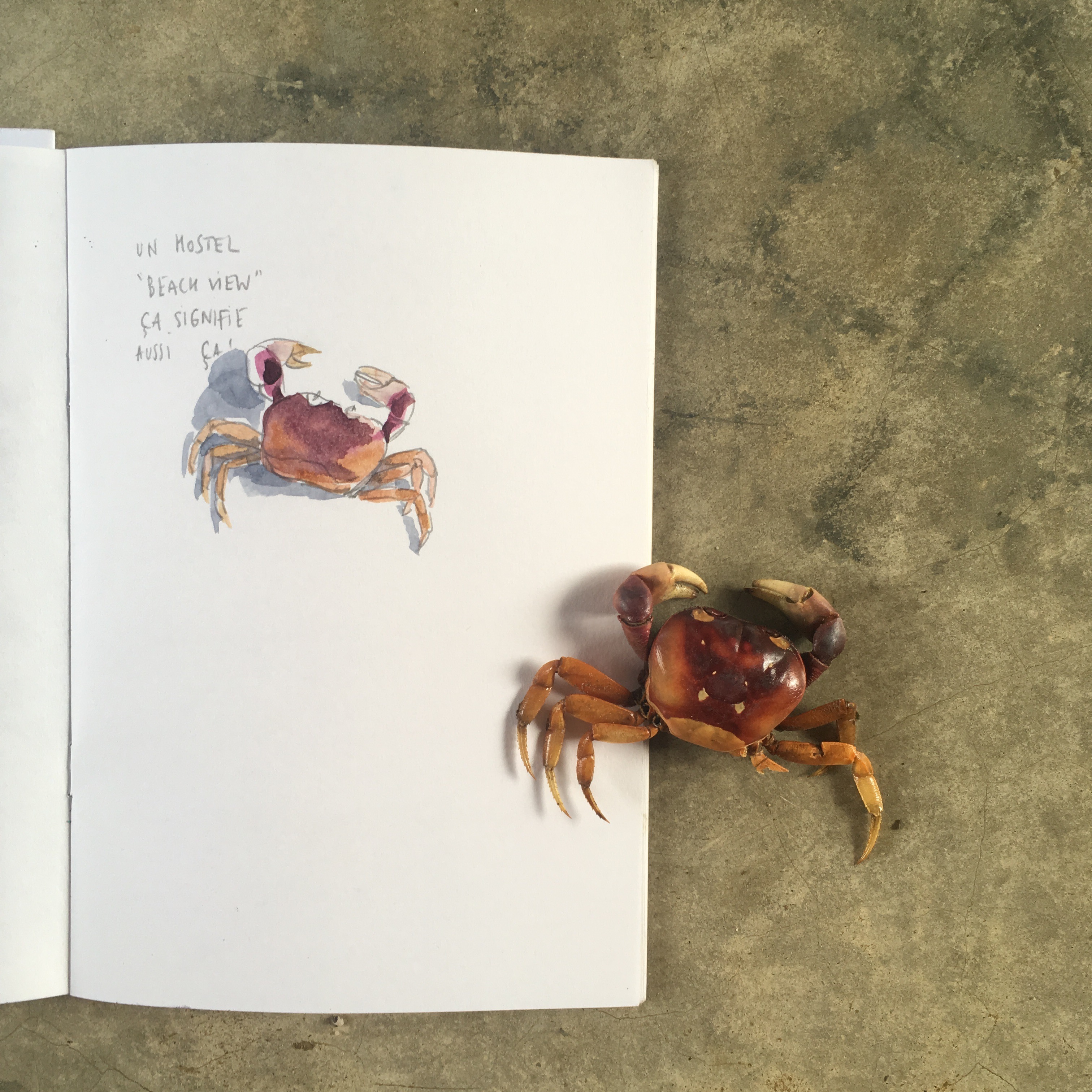 crabe-playa-venao-cove-hostel
