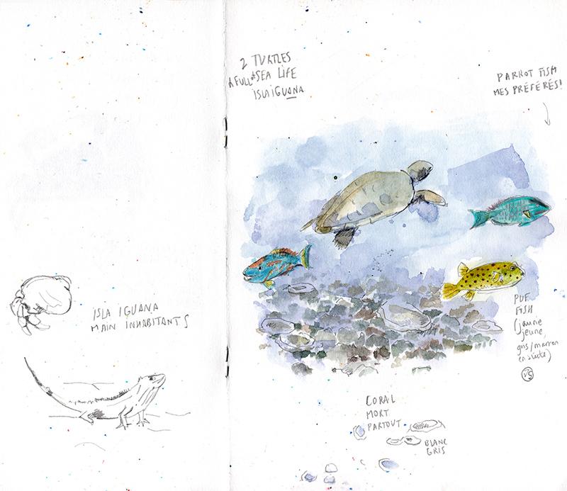isla-iguana-freedeiving-vaguegraphique